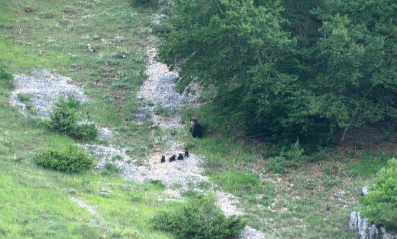 orsa 4 cuccioli