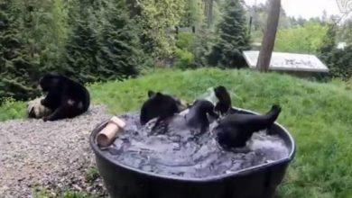 Photo of Il bagno dell'orso Takoda