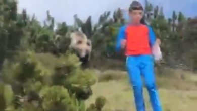 Photo of Spunta orso alle spalle del bambino in Trentino, l'incredibile video