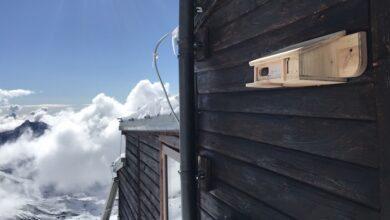 Photo of Fringuello alpino, casa dolce casa a 3.647 mt alla Capanna Gnifetti