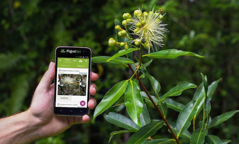 app fiori piante